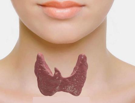 Доступными словами о норме и о последствиях отклонения гормонов щитовидной железы