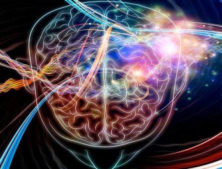 Какие процессы регулируются шишковидной железой головного мозга