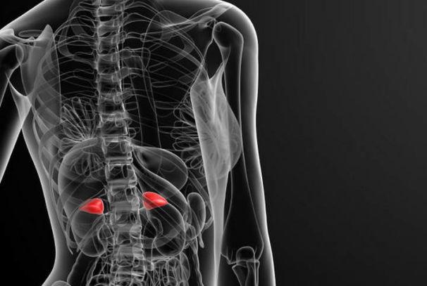 Диагностика и лечение нарушений функций надпочечников