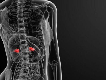 Изменение работы органа – гиперплазия надпочечников