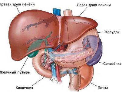 Как происходят и чем вызваны диффузные изменения поджелудочной и печени