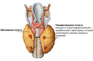 Признаки пониженной функции щитовидной железы