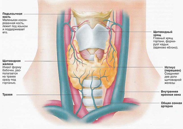 признаки рака щитовидной железы первые симптомы