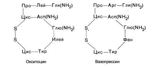Химические структуры гормонов задней доли гипофиза