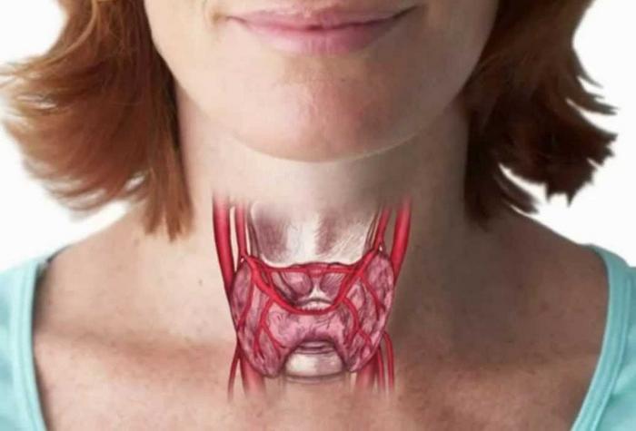 Тест здоровая щитовидная железа