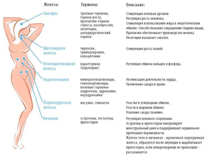 кортизол норма у женщин