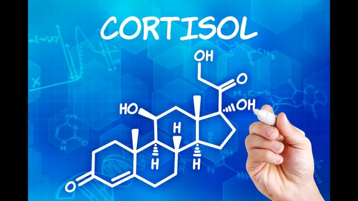 гормон кортизол за что отвечает у женщин