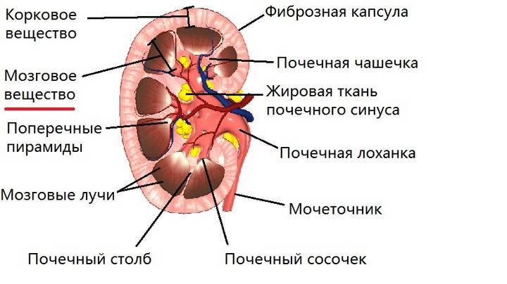 Гормоны мозгового слоя надпочечников