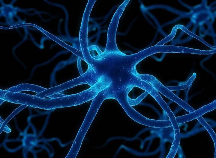 Андрогены и эстрогены