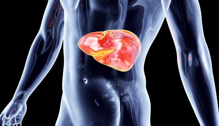 Диффузные изменения паренхимы печени и поджелудочной железы — Все о печени