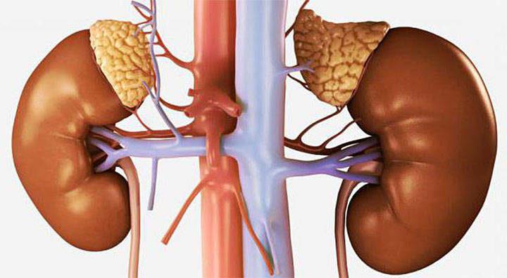 Гипофункция коры надпочечников
